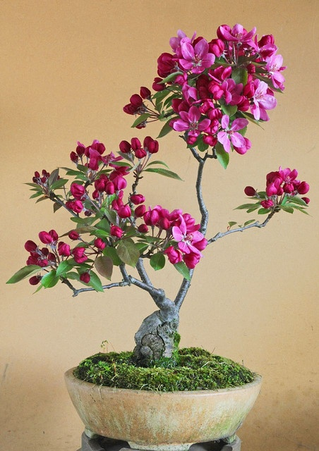 bonsai-flower-plants-collection-for-interiors