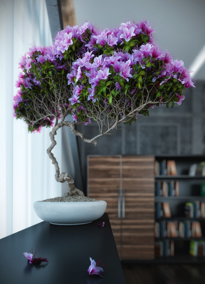 Purple-bonsai-plant