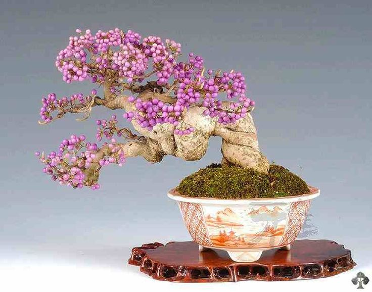 purple-bonzai-plants-collection-for-interiors
